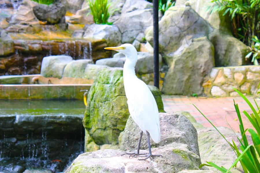 bird-park2