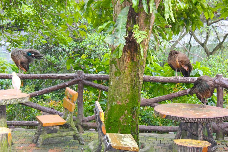 bird-park3