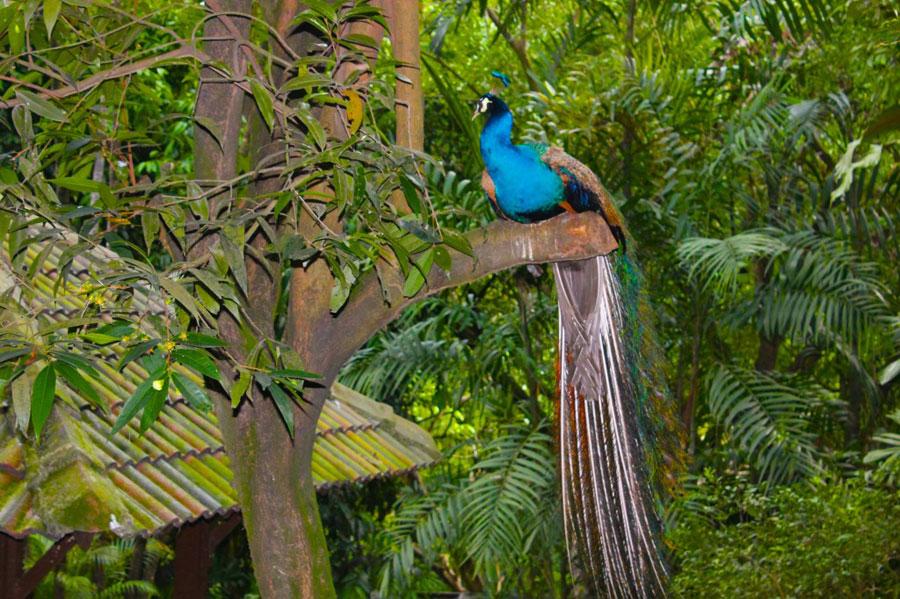 bird-park5