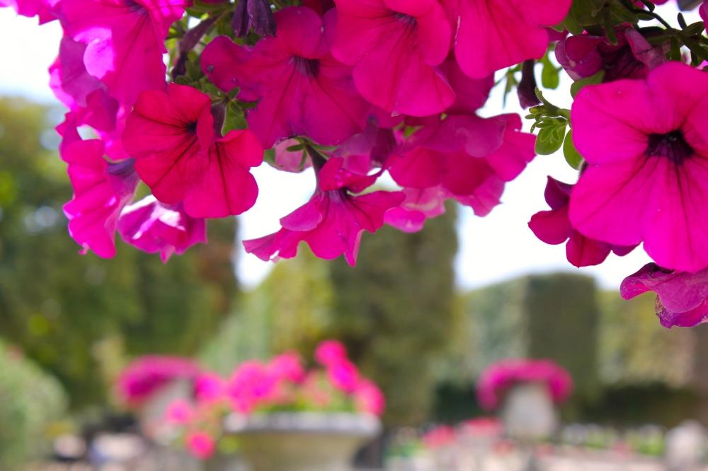 luxumbourg-garden6