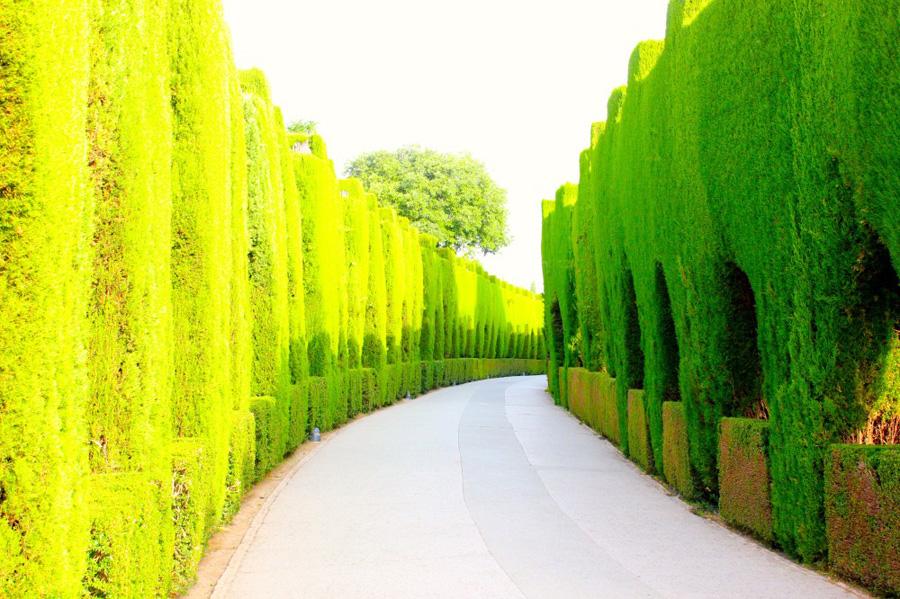 jardins-del-partal-3